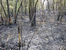 Forest Fire_2