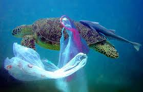 Plasic bags in the sea_1