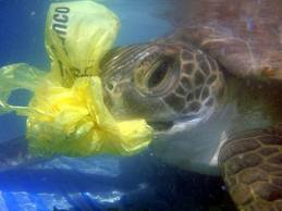 Plasic bags in the sea_2
