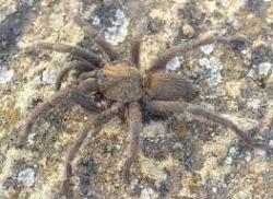 Spiders_tarantula