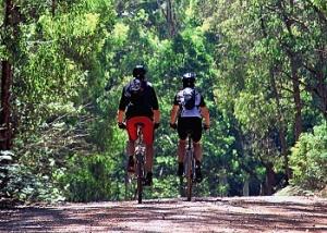 Mountain Bike - Victoria's High Country